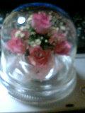 かぷせる花